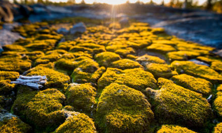 Blankets of moss