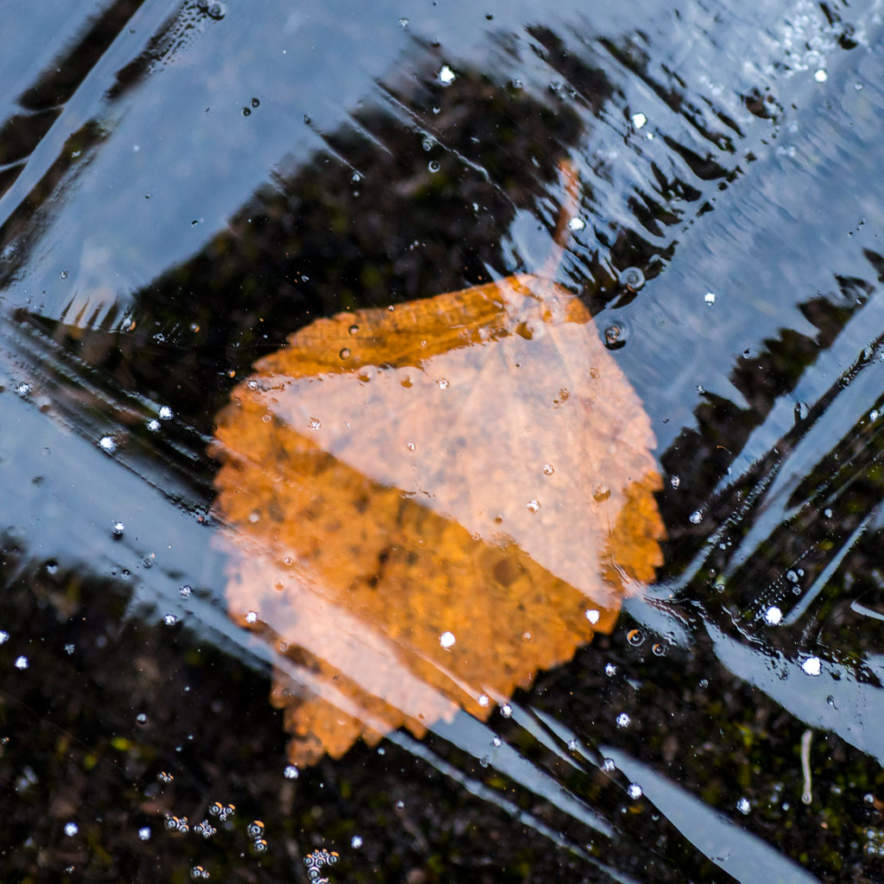 Icebound leaf