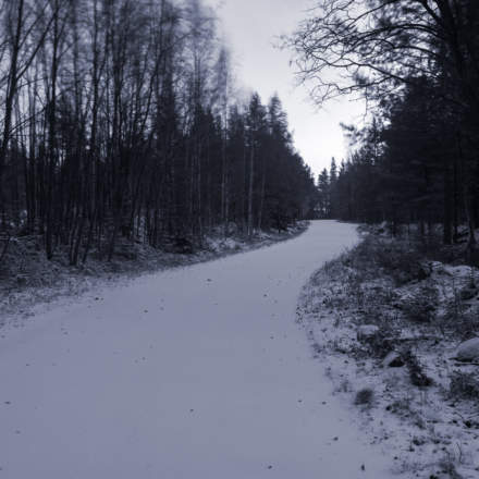 Another forest way