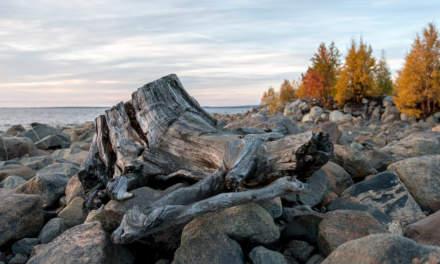 Tree stump at the seaside
