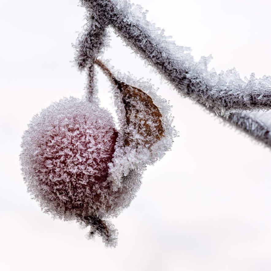 Hoar frost in my garden