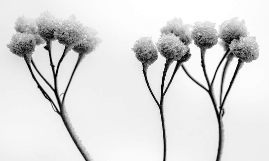 Hoar frost in Bureå