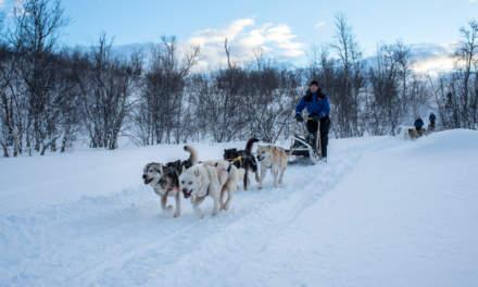 Dog sleds approaching