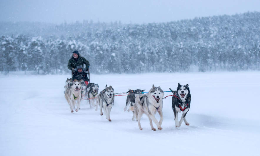 Dog sledging in Jokkmokk