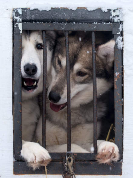Let us out – we want to run!