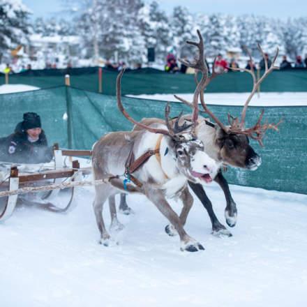 Reindeer race