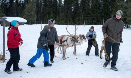 Making contact with the reindeers