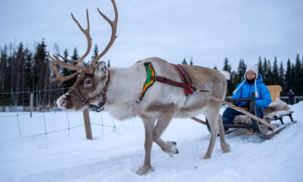 Reindeer sledge ride