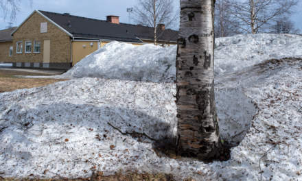 Snow pile with tree