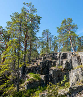 Storberget – trees and rocks