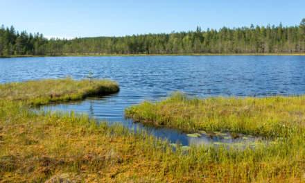 Bog pond near Bygdeträsk