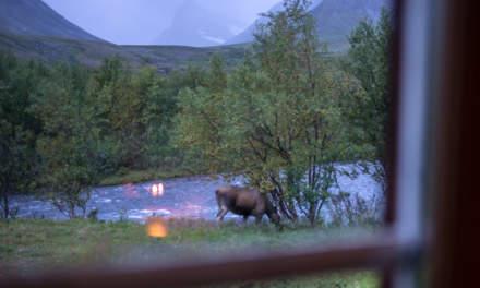 A moose, a moose!
