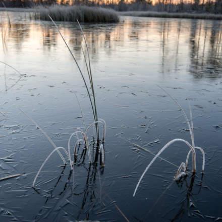 Frozen grass –a fast snapshot