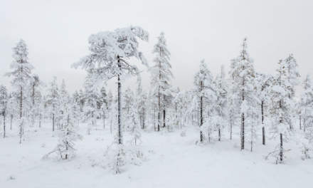Snow covered trees on boggy ground