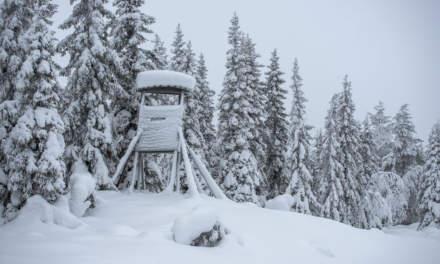 Snowy deer stand
