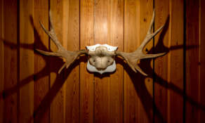 Moose antlers in the stuga