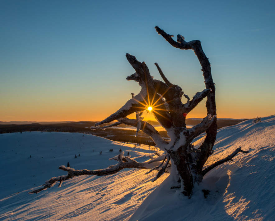 """tree – snow – mountain – sun"""