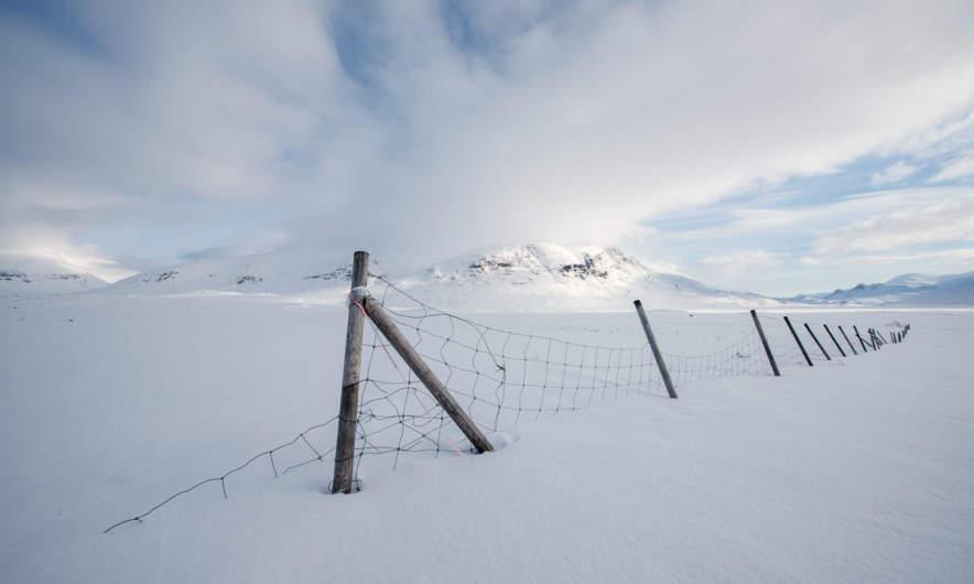 Reindeer fence