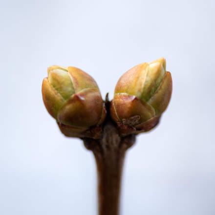 Spring: leaf bud