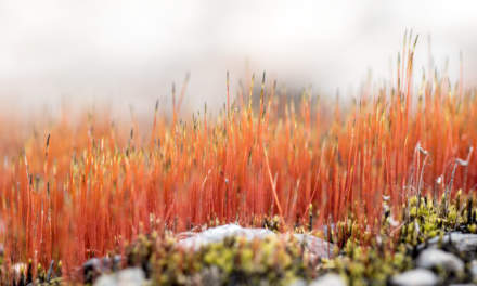 Spring: colourful moss