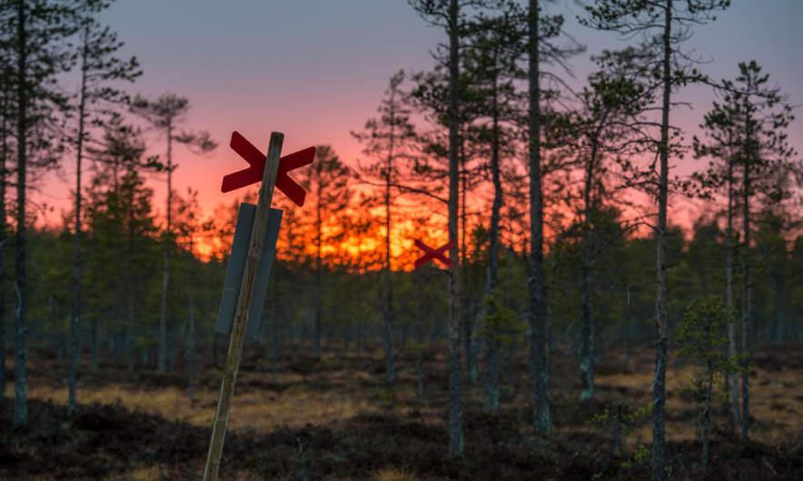 Sunset over the bog