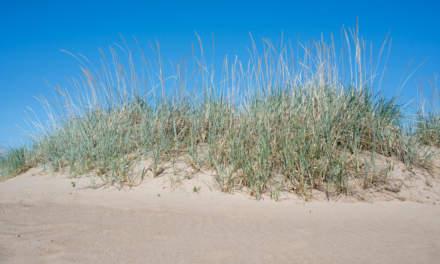 Storsanden beach I