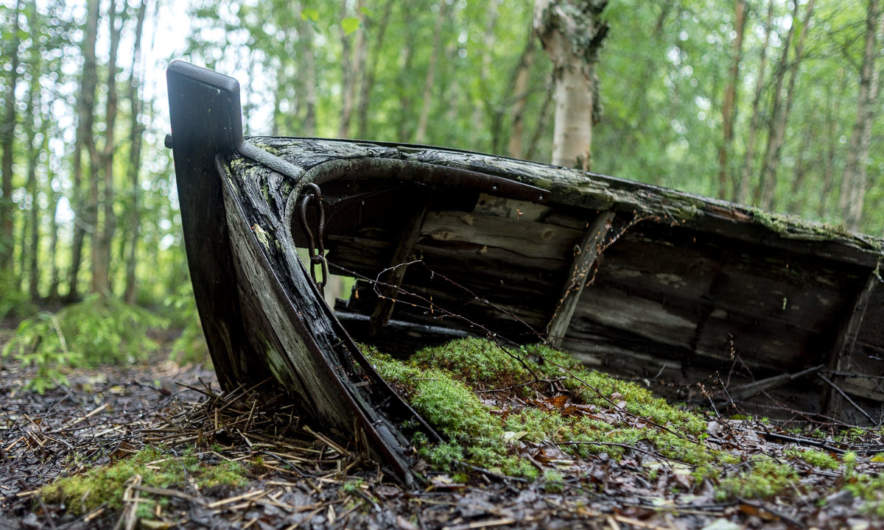 Boat in the forest