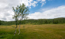 km 230 – swampy ground near Limingdalen.