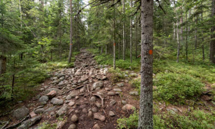 """""""Cobblestone trail"""""""