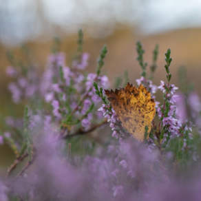 Autumn colours – lilac