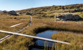 Trail II
