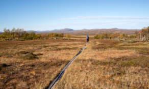 Trail III