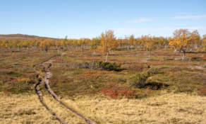 Trail IV