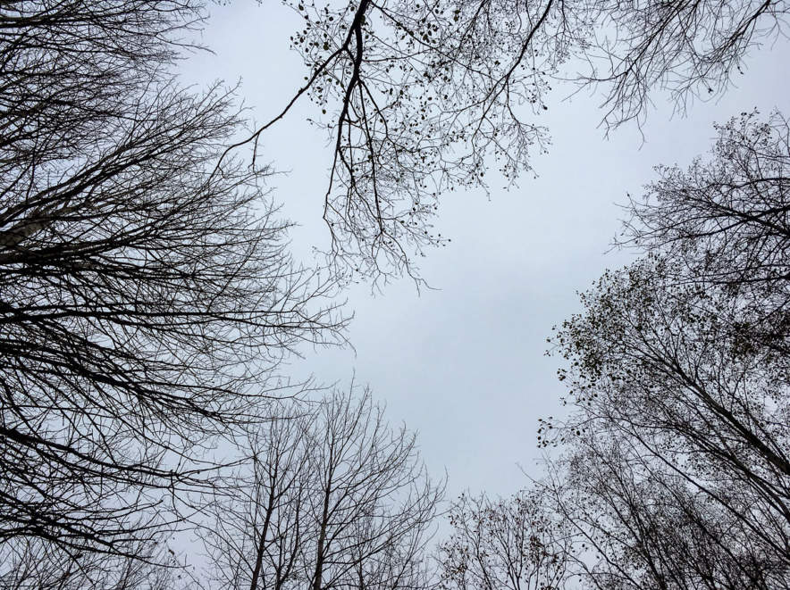 The grey side of autumn (Ume Älvdal)