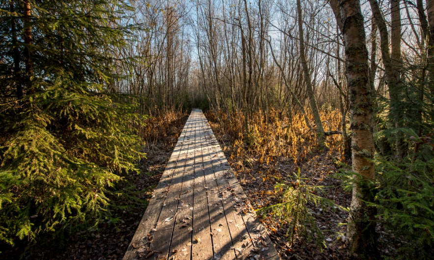 Wooden walkway I