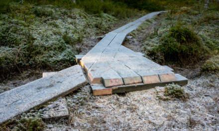 Wooden walkway II