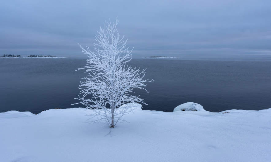 Frost covered tree at the seaside