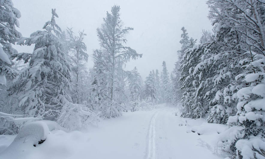 Wintry way through the forest