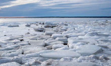 Ice floes along the coast