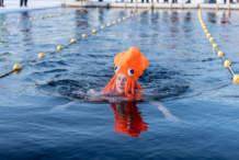 Swimmer: Octopus