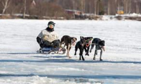 Dog sledding I