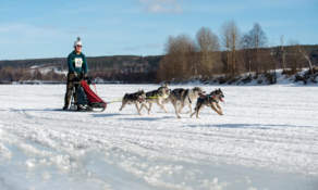 Dog sledding II