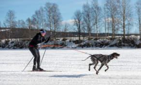 Skijoring I