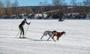 Skijoring II