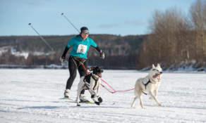 Skijoring III