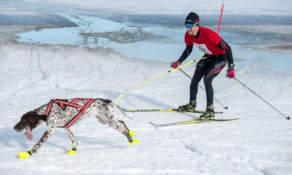 Skijoring IV
