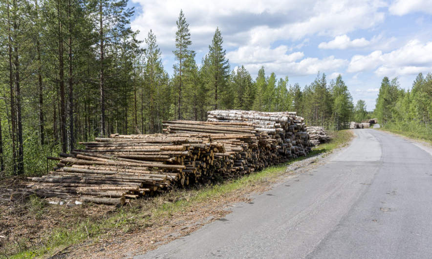 Log piles along the road