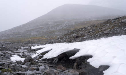 Snow field II