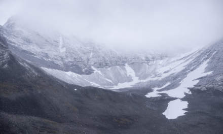 Snow powdered II