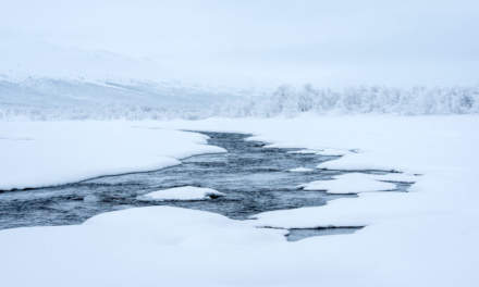 Even in winter time parts of the rivers are open